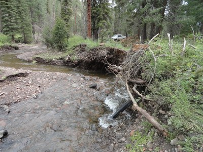 Courtesy of NM State Forestry. Photo by Doug Boykin.