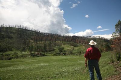 NRCS Staff Surveys a Rehabilitated Wildfire Area.