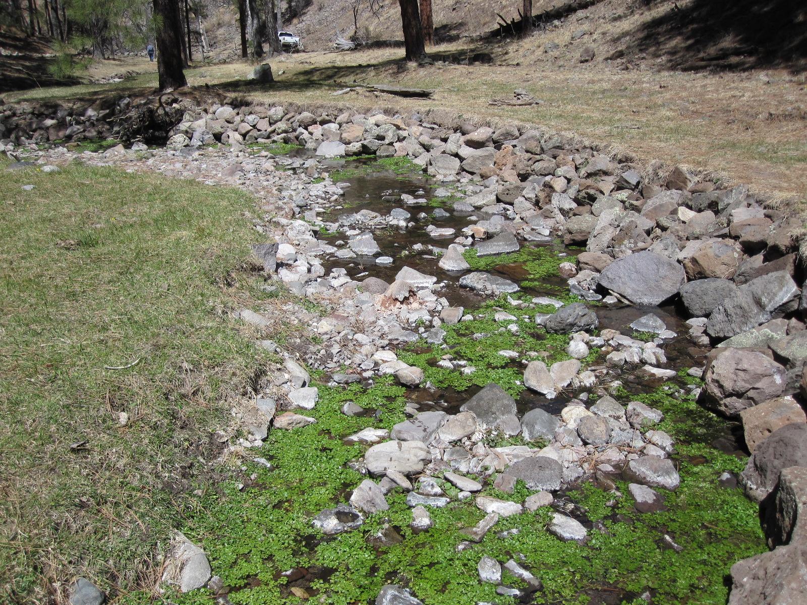stream bank armoring