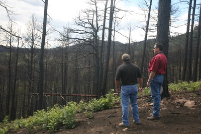 Used courtesy of NRCS. NM NRCS staff survey a burned area after the Track Fire.