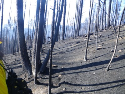 Burned  slopes near Santa Clara Canyon, NM following 2011 Las Conchas Wildfire