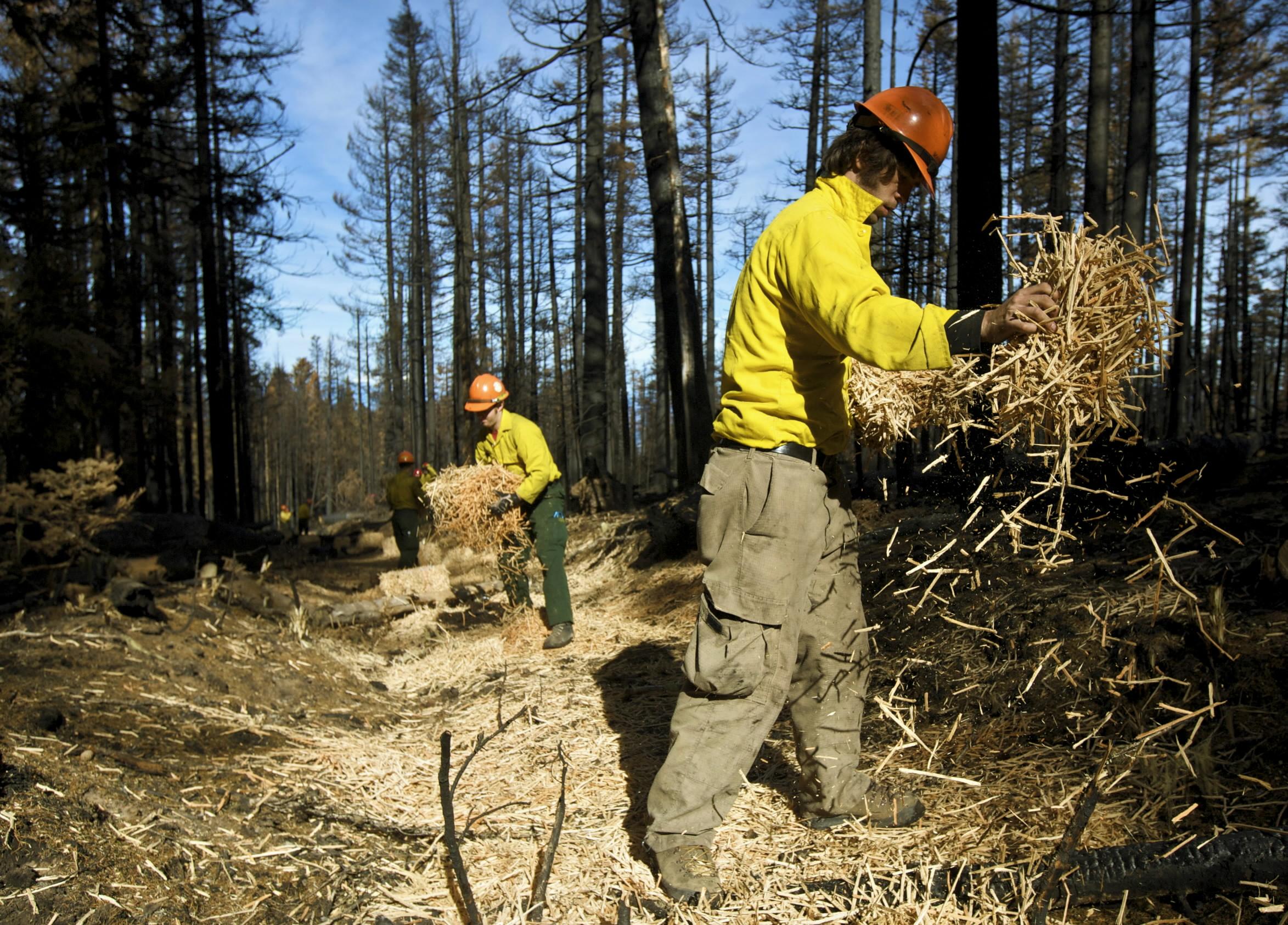 hand application dry mulch