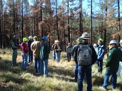 Forestry Workshop