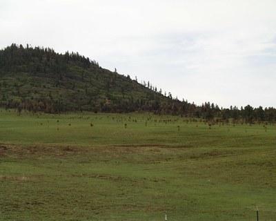 Grassland Burn with New Growth