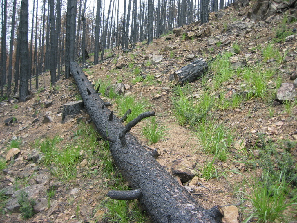log erosion barrier/contour log felling