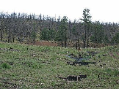 multiple post fire treatments example