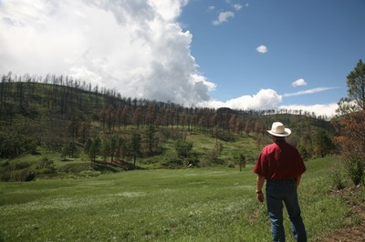NRCS Staff Surveys a Rehabilitated Wildfire Area.