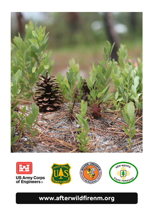 After Wildfire Guide backcover